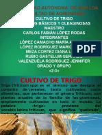 Exposicion Cultivos Trigo