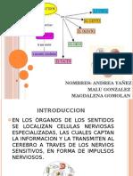 ORGANOS DE LOS SENTIDOS (1).pptx