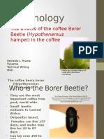 Coffe Borer Tech Writing