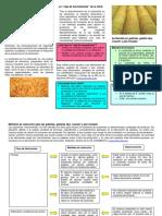 ANEXO 1- Informe Galletas