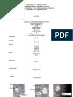 Contoh Hasil Deskripsi Mikropaleontologi