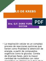 CICLO de KREBSMicrosoft Office PowerPoint (3)