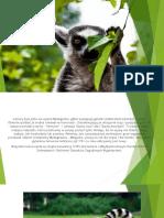 Systematyka lemurów