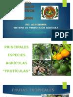 Fruticulas-sistema de Produccion Agricola