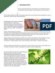 Señales de Forex - introducción