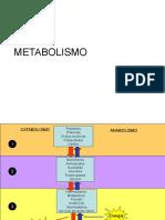 Clase 6 Metabolismo