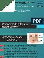 Principales Mecanismo de Defensa de Vías Urinarias