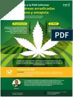Infografía recurso sobre información solicitada a PGR relacionada con hectáreas erradicadas de marihuana y amapola.