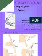Brazo Anatomia