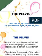 Kp 1.5.1.4 the Pelvis