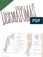 Dermatomas anatómicos