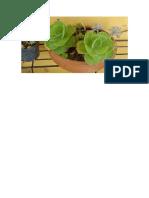 Doc3 Planta de Jade