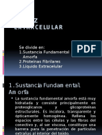 Matriz Extracelular powerpoint