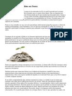 Centrarse en rentables en Forex