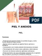 Piel y anexos (1)