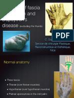 Anatomy Dupuytren