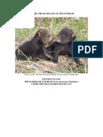 Florida Black Bear Petition