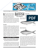 Sea Stats – Baitfish