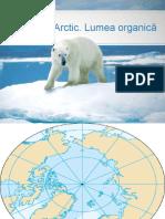 Oceanul Arctic