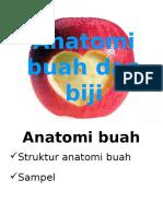 Anatomi Buah Biji