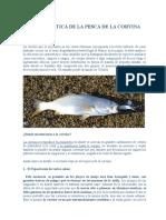 Guía Práctica de La Pesca de La Corvina