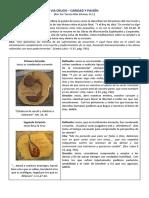 Via_Crucis–Caridad_y_Pasion.pdf
