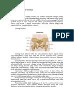 Anatomi Panggul Dan Isinya