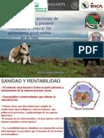 1 Acciones Salud Animal
