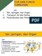 Struktur Dan Fungsi Tumbuhan_1