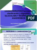 Clase 6 Carbohidratos Digestion Glucolisis y Fermentacion
