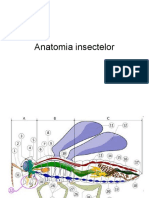 3. Anatomia Insectelor 1 (1)