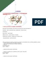 Resumen EP Anato (1)