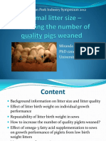 Optimal Litter Size – Increasing the Number of Quality Pigs Weaned
