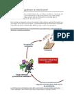 El Ciclo de La Informacion