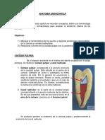 XII.10.- Guía Anatomia_Endodontica
