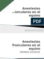Anestesias (Bloqeos) en El Equino