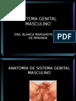 Clase de Genital Masculino