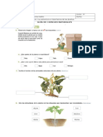Las Plantas Vero