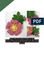 Flori de Maces