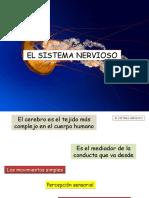 El Sistema Nervioso Clase 1