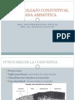 Colgajos Conjuntivales y membrana amniótica