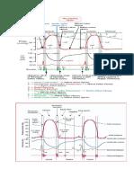 Cardiac cycle.docx
