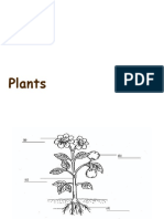 plant structure