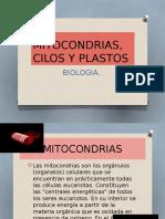 Mitocondrias, Cilos y Flagelos