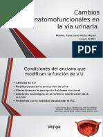 Cambios Anatomofuncionales en La via Urinaria