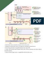 Biokimia Saraf Otot