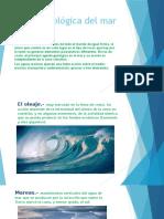 Acción Geológica Del Mar - Semana 10