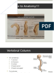 Anatomy Review Block 1