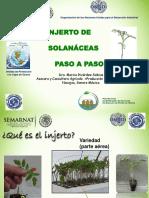 (Http---librosagronomicos.blogspot.mx-)-2.3 El Injerto en Solanaceas Paso a Paso (Ricardez) (1)