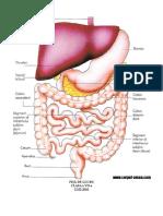 Fișă de Lucru.a 7a Digestivdoc